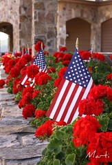 Flags and Flowers at The Dillard House (FLPhotonut) Tags: flowers red vacation colorful flag americanflag textures independenceday begonias dillardhouse canon50d july42009 flphotonut