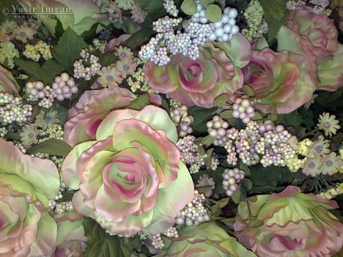 گلاب کا پھول – یوم فوٹوگرافی ہفتہ بلاگستان | Yasir Imran Mirza May Flowers Tumblr