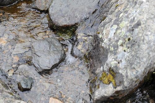 湧き水スポット