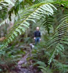 Bushwalkin in Tasmania