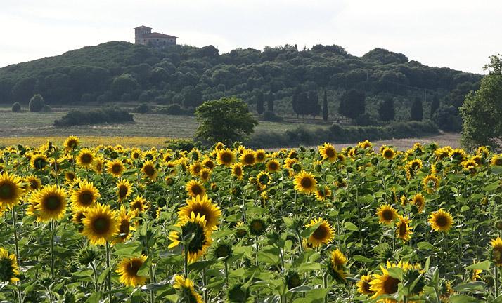 san vincenzo tuscany