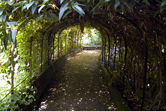 The Exotic Garden (Paul Saxton) Tags: flowers plants norwich exoticgarden thorperoad nikond40