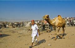 Camel Walking at Pushkar (Anoop Negi) Tags: world portrait sun india color colour photography for photo sand media place image photos delhi indian dune bangalore creative culture fair images best camel po tradition mumbai pushkar camps anoop journalism rajasthan 2007  negi trader ndia photosof  ezee123  bestphotographer   imagesof anoopnegi   jjournalism     n