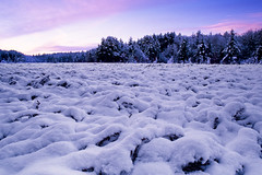 190* (Northwoods Photos) Tags: winter sunset snow film nature wisconsin 35mm scenery pentax bogs bog wetland northwoods wisconsintnc10