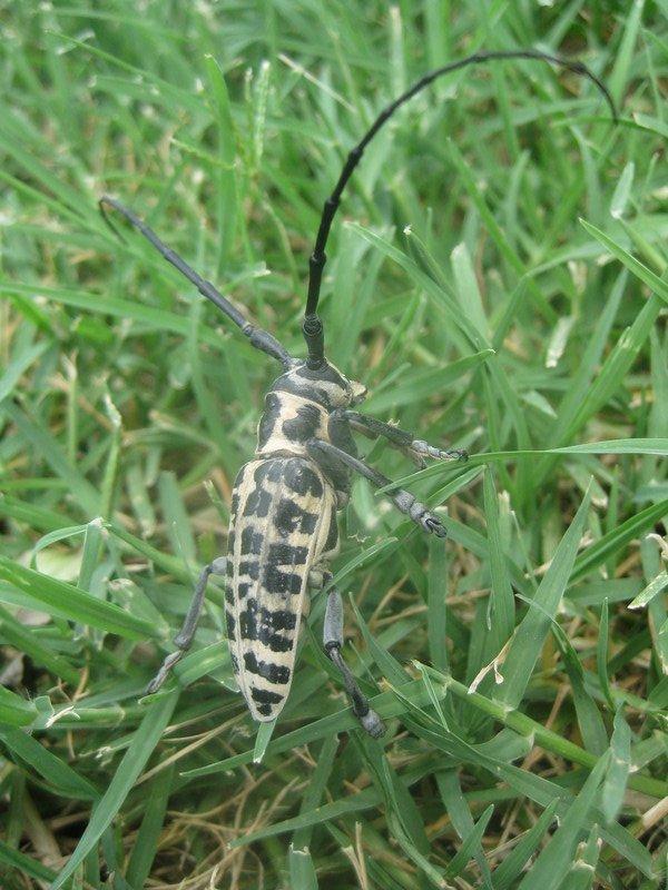 Strange Bug 3