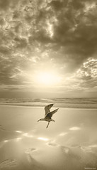 Urgent Landing (Ben Heine) Tags: ocean camera wallpaper sky mer seagulls cold holland reflection bird art texture monochrome rain birds composite sepia clouds composition plane print poster landsc