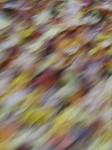 091023. leaves in motion. i love this one.