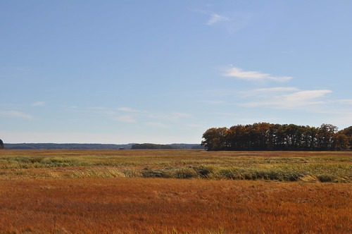 Field Outside Crane Beach