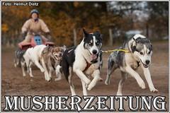 Hanne & Huskies aus Preußen