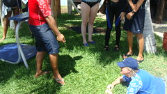 sea lion training session- planning stage (ABC Dolphin Trainer Academy) Tags: sea dolphin lion manatee cancun trainer trainingsession dolphindiscovery animaltraining sealiontrainer entrenadordelobos positivereinforcementtraining entrenamientorefuerzopositiva