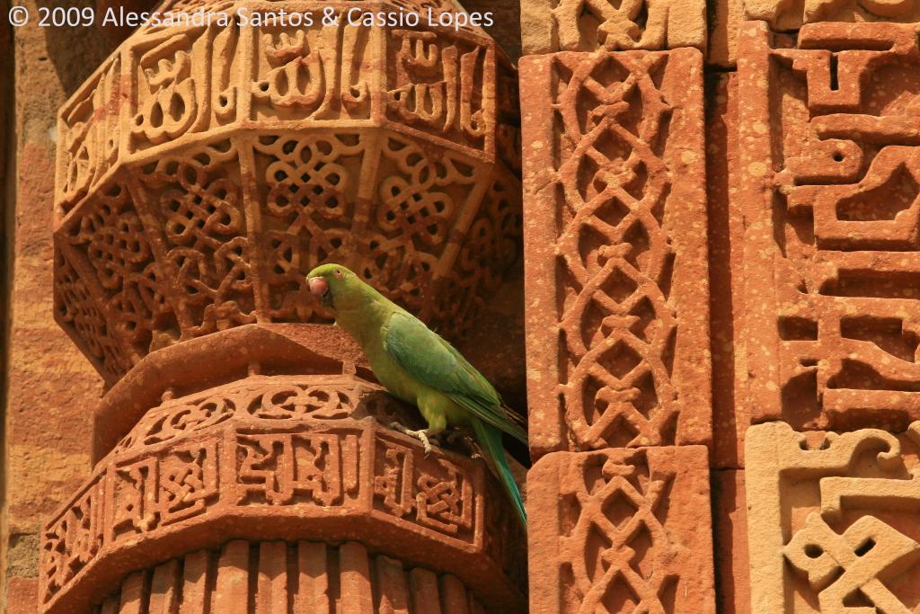 Qutab Minar IMG_0368_F