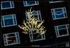 Echos of Spring #5 (bert.raaphorst) Tags: tree boat canals nocrop intothelight springinamsterdam urbanspring echosofspring shiningintheshadow