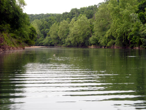 Kings River - Northwest Arkansas
