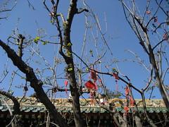 IMG_0985 (waldmeisterlein) Tags: china tree temple buddhist beijing baum peking tempel buddhistisch neujahrswnsche