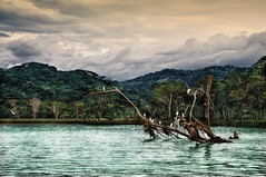 """ Jungle "" (Alfredo11) Tags: trees sea sky seascape texture textura water birds clouds mar agua costarica arboles aves jungle pajaros cielo nubes alfredo vegetation vegetacion jungla nikon1755mm28 nikond300"