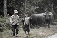 Deux enfants, deux buffles et trois petits oiseaux (Stph@ne) Tags: nature nb vietnam hoian asie hanoi sapa rizires photosvoles d40 baiedhalong scnedevie