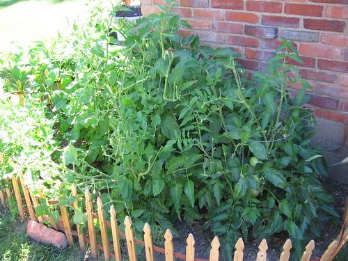 Garden Month 3