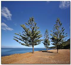 Three Tree Viewpoint (Panorama Paul) Tags: soe simonstown nohdr shieldofexcellence nikfilters vertorama nikond300 wwwpaulbruinscoza paulbruinsphotography