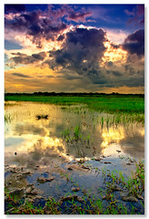 monsoon madness - 2 (Soumya Bandyopadhyay) Tags: sunset sky cloud reflection colors vertical rural paddy wide dramatic polarizer bengal gradnd aplusphoto pentaxk200d pentax1855mmii