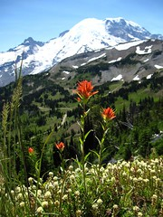 Mount Rainier - wildflowers