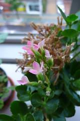 용케 꽃피운 화분