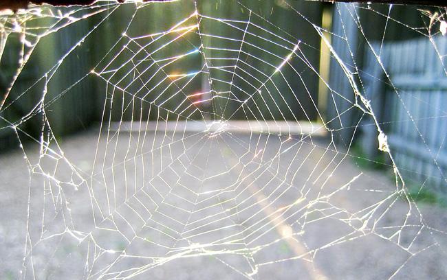 ännu mer spindelnät