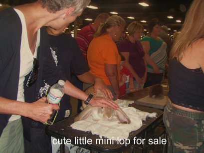 my sisiter patting a mini lop bunny at the state fair