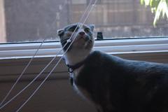 Money Bag: Jubler (I M A U-M-N-B-N!) Tags: friends money animal cat bag best friendly disigured