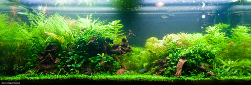 75G - Aquascape at 1.5 Months