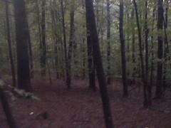 Open Woods