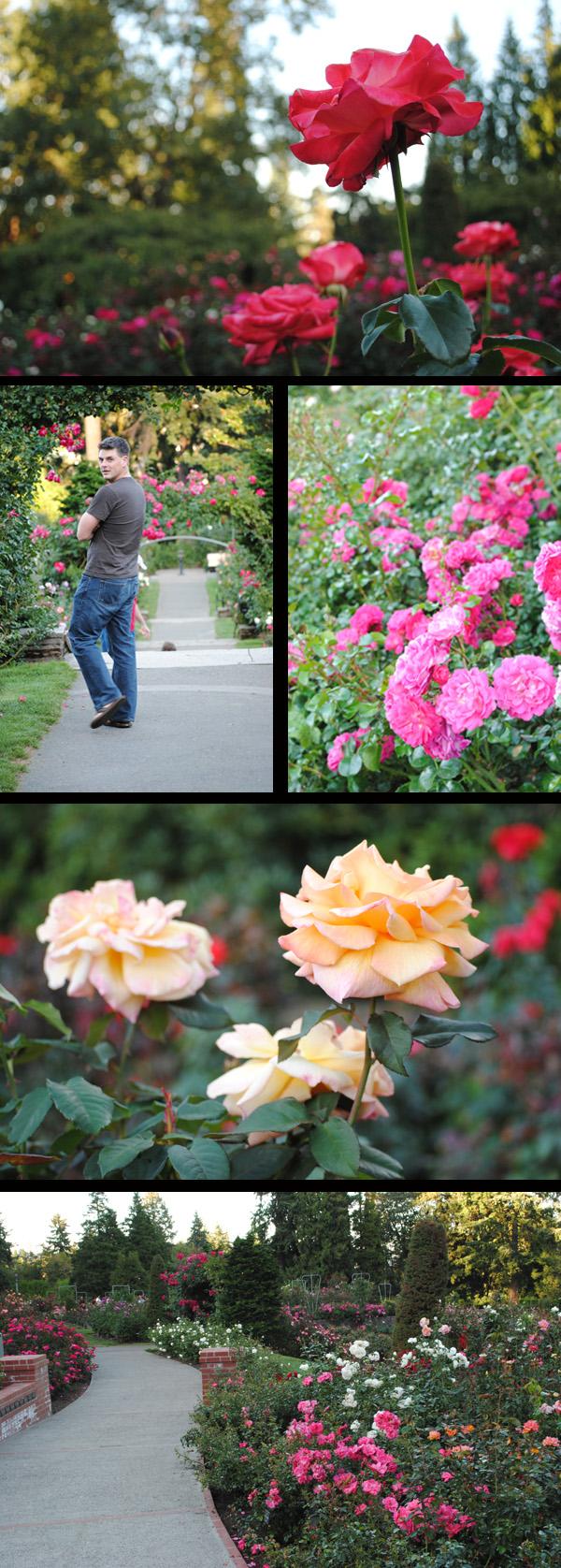Portland-Roses
