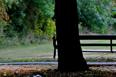 Autumn Gathering...HBM (Chris H#) Tags: autumn brown tree green leaves silhouette bench squirrel northamptonshire climbing s3000 autumngathering benchmonday nikond5000 rushdenhallpark