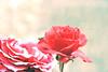 ارجـوكـ تــسكت (NUNULICIOUS مباركـ عليكم الشهر ,,) Tags: من اليوم انا قلبك ان وانا وين الحب لي هي هاذي عيوني لها حياتي الوفا اعرف او الليل وشلون راحت اسف ودي عرف صرف عندكم تنساني دمعها ياما مادام اشتاق عذر الخياااانه احسب جرف ياشيخ سهرت اصوله تقوله واوله وياما بلقى مالكـ ارجوكـ تسكتـ لاتكلمـ ولابحرف كلامـ اذرفت ذرف انكشف ميوله دخليك بهذي السهوله والكذب فهالزمن ماتطوله