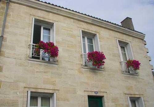 Flowery Windows