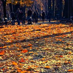 (mattrulez) Tags: autumn nikon raw krakoff