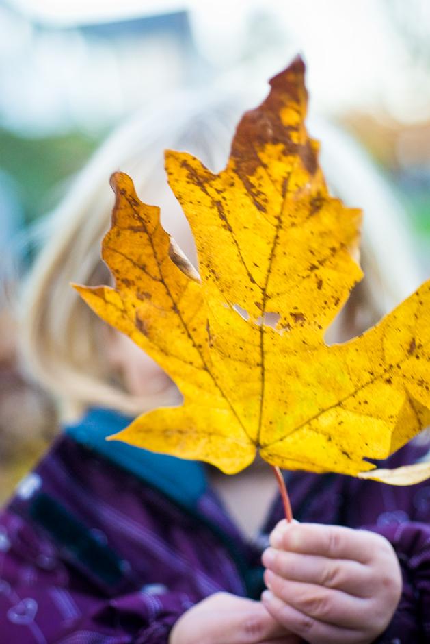 leaves-16