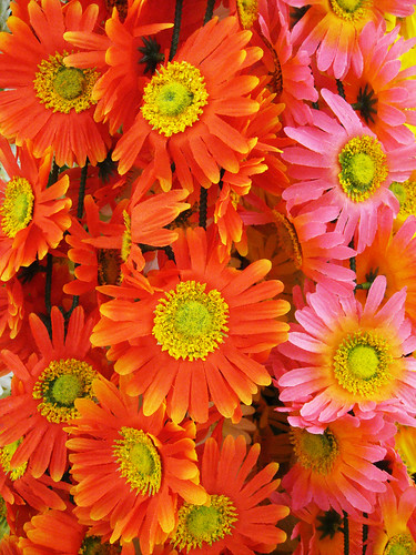 Colorful Silk Daisies