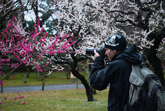 DSC_9105 (Alex Rowan) Tags: people plants flower alex japan kyoto asia downtown  cherryblossom rowan plumblossom  nijojo nijocastle  centralkyoto  alexrowanphotography