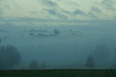 Morning Emerges (Deepgreen2009) Tags: fod morning emerging trees silhouettes winter atmospheric visibility reduced rural