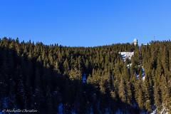 Licht & Schatten (Michelle Christin) Tags: licht schatten mummelsee schwarzwald sonne sun wald blackforest canon 60d