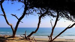 A Paradise in Salento (Frank Abbate) Tags: beach spiaggia alimini otranto mare sea lecce salento sabbia alberi sand trees canon eos 80d adriatico adriatic mediterran mediterraneo puglia apulia italy italia italien