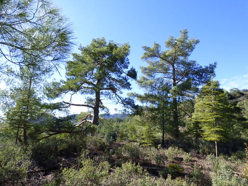 Troodos, en route to Kykkos Monastery (9)