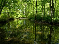 God's  Green (kweaver2) Tags: trees green nature water reflections landscape photography pennsylvania reflexions pymatuningstatepark kweaver2 olympuse520 kathyweaver pfemerald primevalforestgroups pfgreenwater