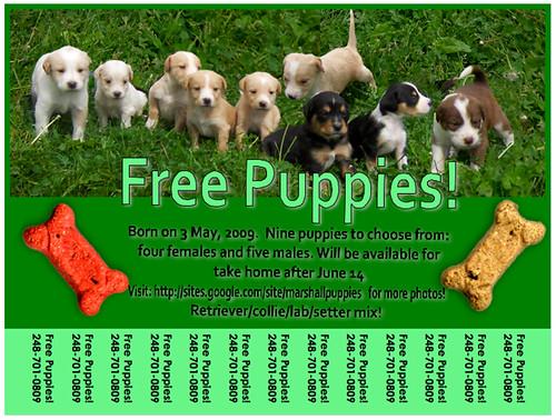 puppyflier