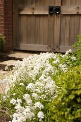 秘密の花園への扉