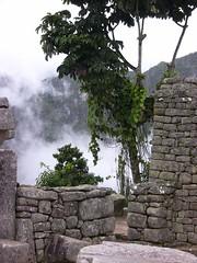 Peru - Machu Picchu - Baum vor Gemuer (roba66) Tags: mountains peru inka berge machupicchu ruinen inkas huaynapicchu mauern antik sdamerika ruinenstadt perumachupicchu stadtindenwolken vosplusbellesphotos greatshotss travelsofhomerodyssey