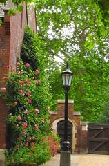 Lincoln's Inn Roses