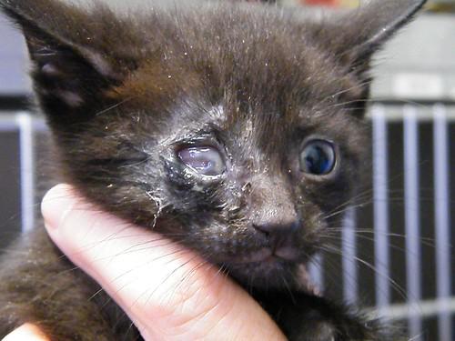 Cat Eye Rupture