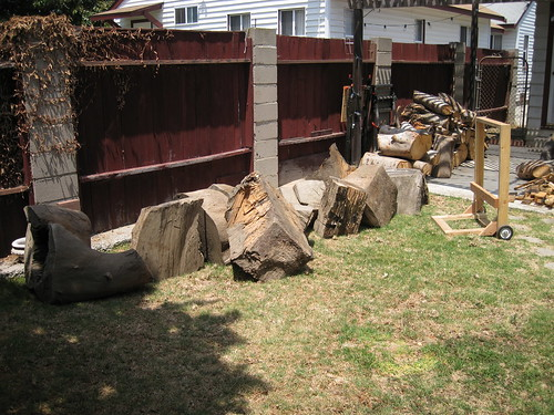 huge Eucalyptus logs in the backyard