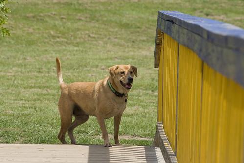 anna at dog park2